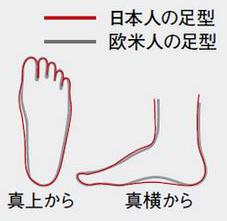 日本人と欧米人の足型の違い